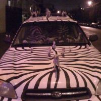 Attack of the Zebra-mobile