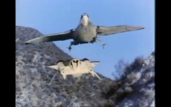 hawk vs buck