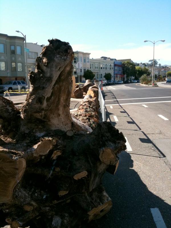 guerrero beach driftwood