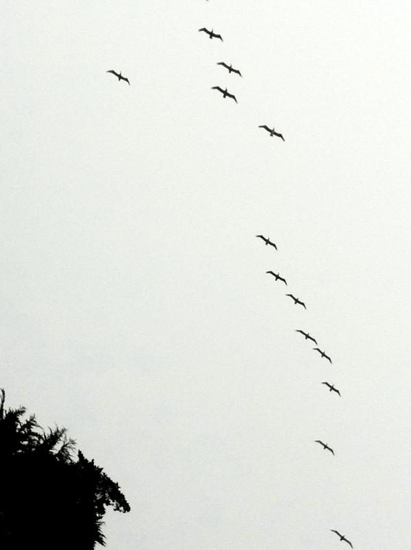 20110813-114823.jpg