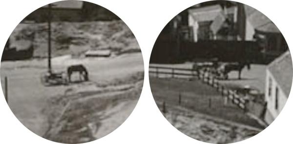 1907 bernal horses