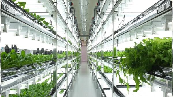 toshiba-indoor-farm
