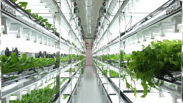 toshiba-indoor-farm